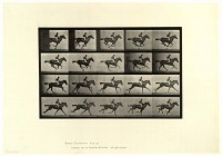 Animal locomotion. Plate 627