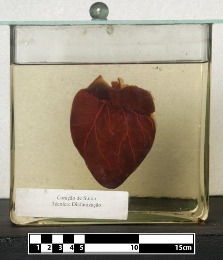 "I call this piece ""Pig's heart, with metadata"". Photo by Museum of Veterinary Anatomy FMVZ USP/Wagner Souza e Silva, CC BY-SA 4.0."